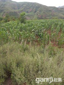 土地可种植养殖放牧建造-图(7)