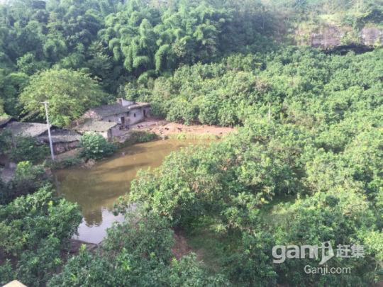 武胜县100亩柚子园招租或合作-图(4)