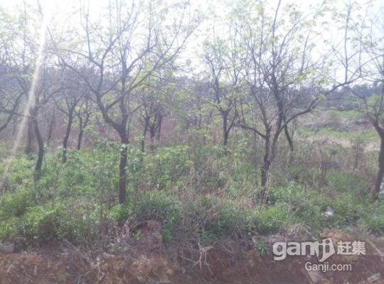 虎山西路上方虎山两亩土地对外招租-图(3)