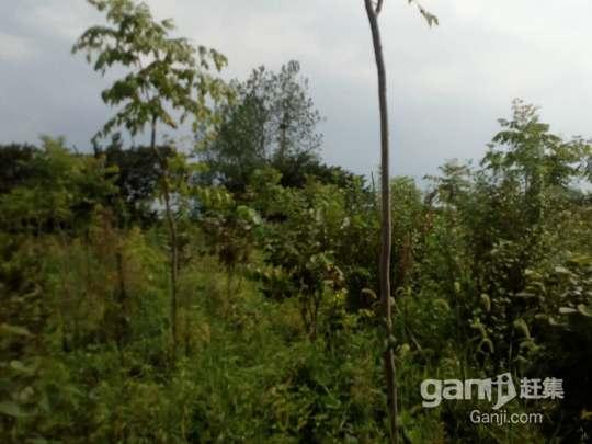 镇江丹徒城际站(镇江东站)规划区内一片园林转让-图(3)