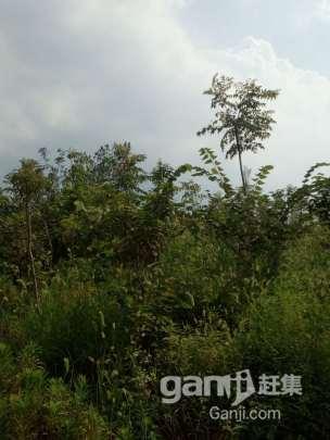 镇江丹徒城际站(镇江东站)规划区内一片园林转让-图(4)
