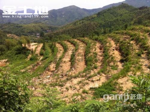 安徽省宣城市广德县87亩山核桃幼林地转让-图(1)