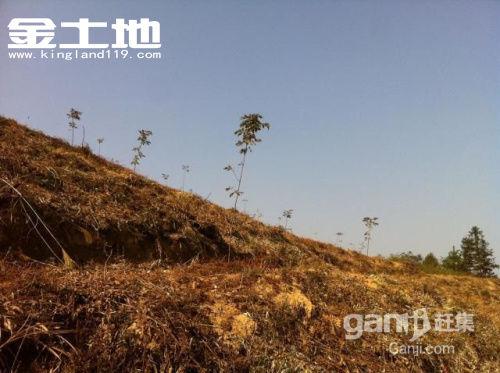 安徽省宣城市广德县87亩山核桃幼林地转让-图(2)