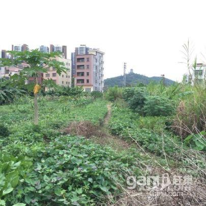 东乡苗圃 宽10米 长26米 宅基地 出售-图(1)
