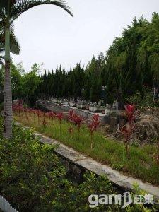 四厦岭 墓地转让-图(3)