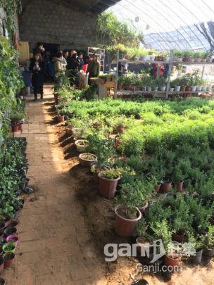 阳曲县农用土地种植养殖农家乐坡地梯田转让-图(4)