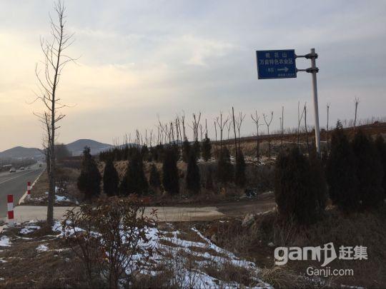 613省道西段土地转让-图(2)