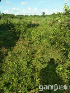 可以报建的土地出售-图(3)