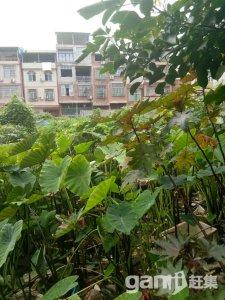 上思县城土地出售-图(4)