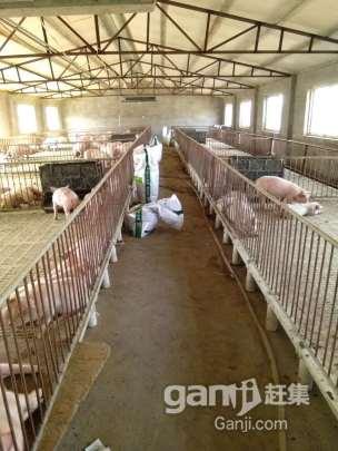 猪场转让,价格优惠-图(7)