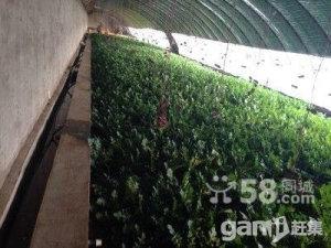 千里山工业园区管委会西50米高效农业-图(1)