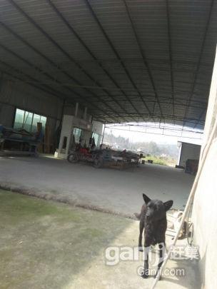 厂房出租可以电联-图(1)