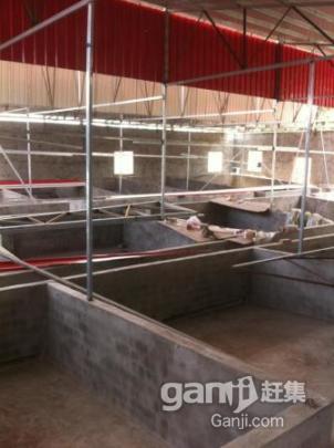 大型养猪场出租,快来租,非常好的环境位子巴适的很-图(5)
