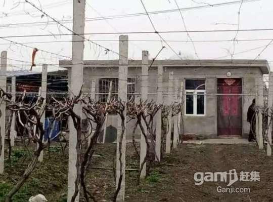 转让淮南农场葡萄园,树龄3年,品种多样化,还盖了住房-图(6)