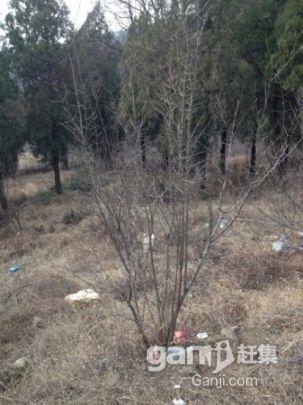 怀远荆涂风景区_涂山园林 出售石榴苗承包土地-图(2)