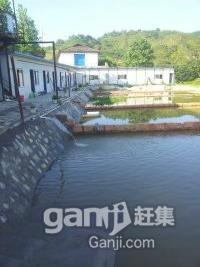 泥鳅养殖基地出租或转让-图(2)
