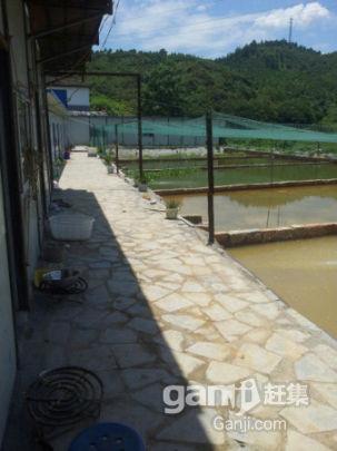 泥鳅养殖基地出租或转让-图(3)