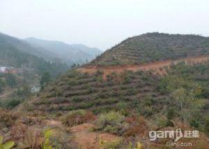 江西赣县105国道边8000亩山地转让