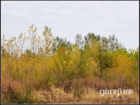 红旗林场土地房屋出售(房屋、土地、鱼池)-图(2)