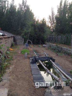 出租3亩土地,带棚带院,水电齐全-图(6)