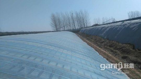 地段优越性价比超高的温室大棚急需对外出租-图(4)