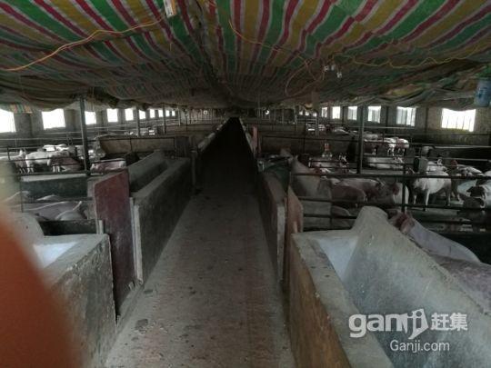 湖南永州珠山镇养猪场可出售或者出租(年出栏2000头)-图(1)