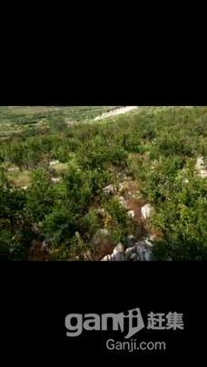 峄城区万亩榴园-图(1)
