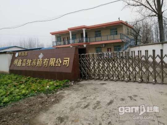转租或转让养殖厂房占地11亩厂房2000平米左右-图(1)