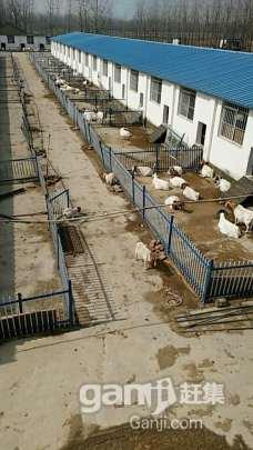 转租或转让养殖厂房占地11亩厂房2000平米左右-图(3)
