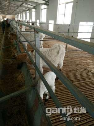 转租或转让养殖厂房占地11亩厂房2000平米左右-图(5)