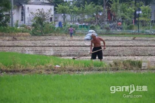 阳山七拱2000亩土地招商超长年期30年-图(3)