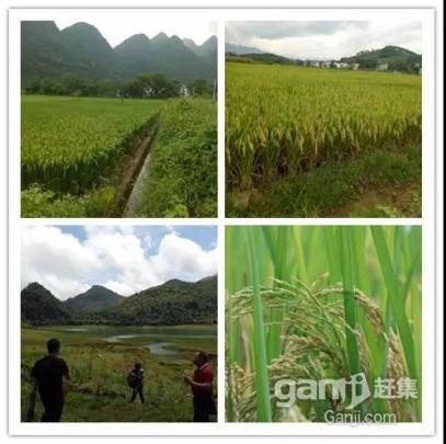 阳山七拱2000亩土地招商超长年期30年-图(4)