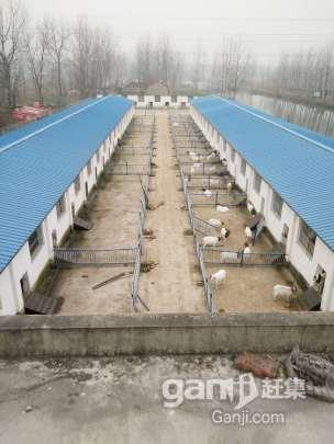 转租或转让养殖厂房占地11亩厂房2000平米左右-图(6)