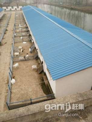 转租或转让养殖厂房占地11亩厂房2000平米左右-图(7)