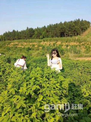 农家乐度假村场地出租,1000平米-图(1)