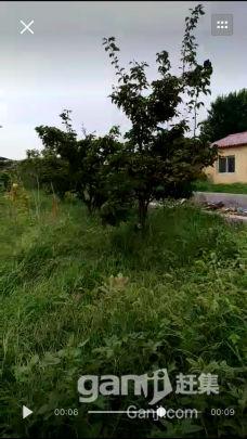 出租土地及房屋,大棚-图(4)