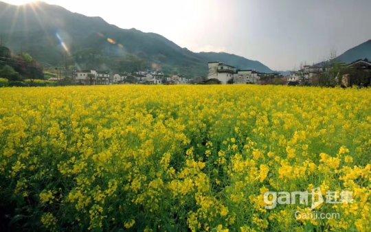 农家乐度假村场地出租,1000平米-图(5)