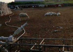 文钟镇南大营子羊场