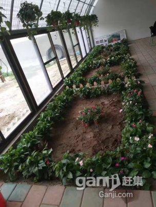 涿州 快乐庄园农场-图(7)