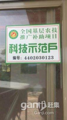 武江 镇泰玩具厂后山有大量地皮出租-图(1)