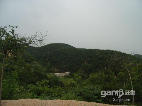 120亩+200亩两处山林地低价出租或转让(手续齐全)-图(6)