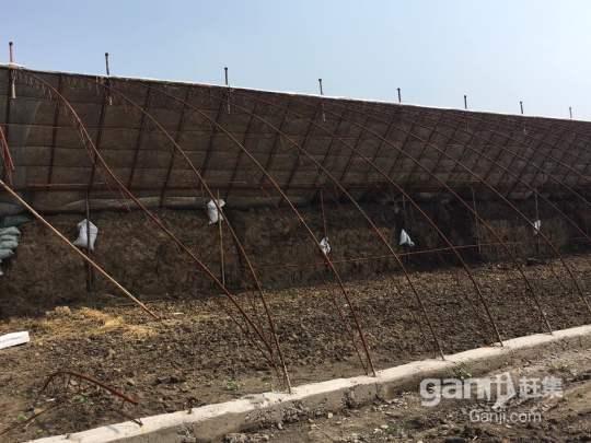 铁岭县双井子范家村50亩新建室内大棚出租出售-图(2)
