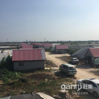 东营区-西城 高温大棚出租-图(5)