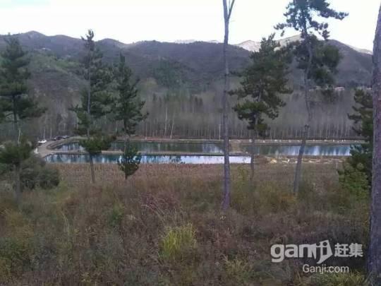 丰宁县垂钓鱼池出租-图(1)