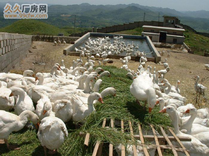 贵阳市土地出租、合作或转让-图(4)