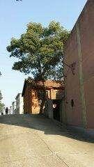 岳阳县境内大面积厂房,土地出租或转让,1万平米以上-图(4)