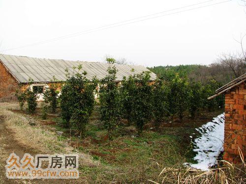 南京溧水经济开发区60亩原生态、土地、厂房、养殖场、林场-图(5)