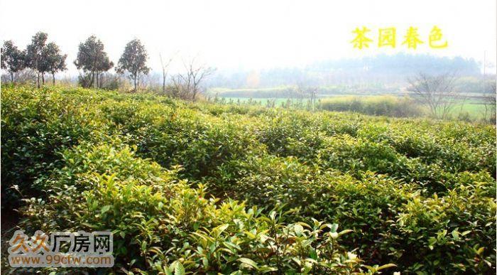 南京溧水经济开发区60亩原生态、土地、厂房、养殖场、林场-图(6)