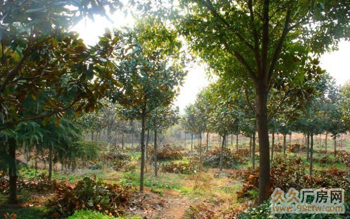 南京溧水经济开发区60亩原生态、土地、厂房、养殖场、林场-图(7)
