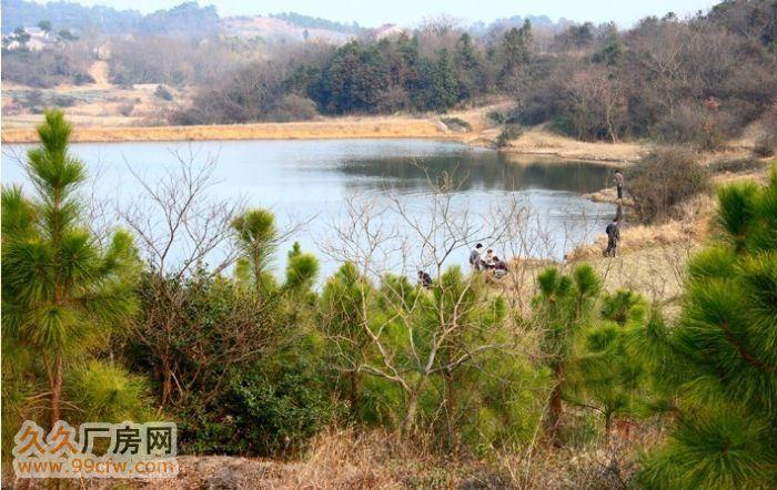 南京溧水经济开发区60亩原生态、土地、厂房、养殖场、林场-图(8)